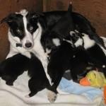 Xen Calvin 3 wks Xen nursing pups