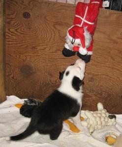 Xen Calvin 4 wks Katie- Dot getting Santa