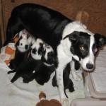 Xen Calvin 4 wks Xen feeding pups standing
