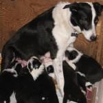 Xen Calvin 4 wks Xen nursing sitting
