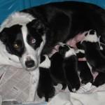 Xen Calvin Litter- 1 wk old Xen pups 2
